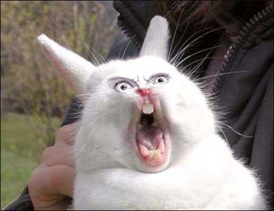 crazy_rabbit.jpg